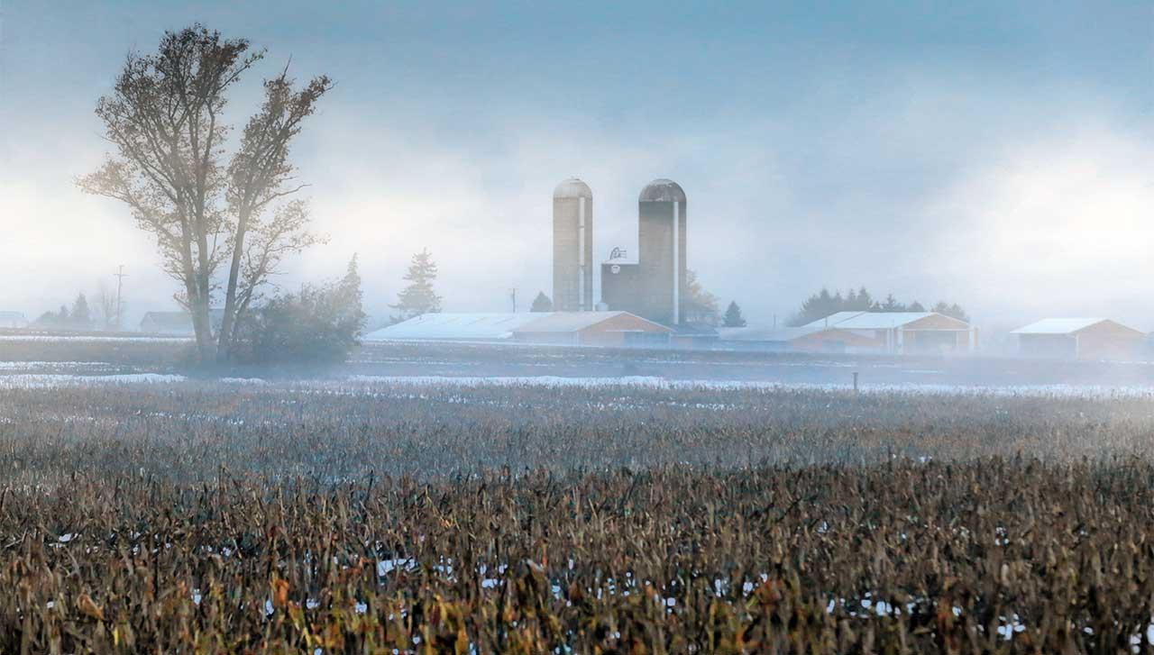 Morning fog over the farm near Geneva